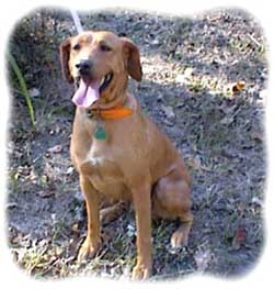 Kemmer Stock Mountain Cur